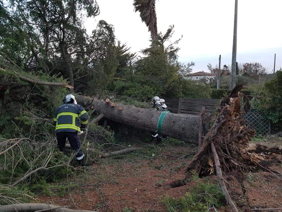 Dégâts d'un arbre tombé sur une maison à Vence. Photo Fabrice Quidou / Correspondant local